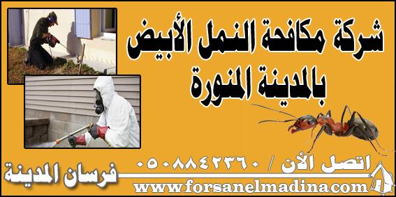شركة مكافحة النمل الأبيض بالمدينة المنورة 0508842360