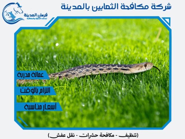 شركة مكافحة الثعابين بالمدينة المنورة
