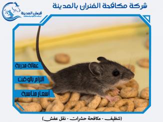 شركة مكافحة الفئران بالمدينة المنورة